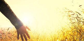 Pomocny w zwalczaniu chwastów herbicyd na kukurydzę